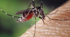 remedios para ahuyentar mosquitos