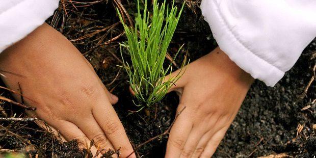 reforestación como actividad educativa