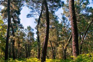 Corredor ecológico y de biodiversidad Pinares del Tiétar